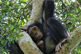 Kibale Forest NP