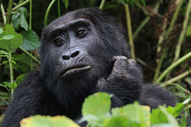 Bwindi-impenetrable-forest-National-Park