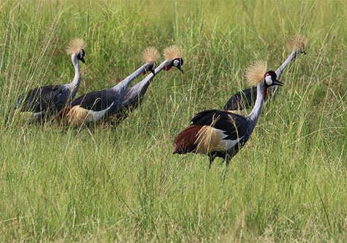birding-safaris